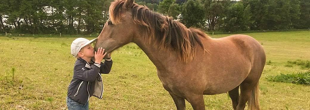Motiv: Reiterferien und Familienurlaub auf dem Pferdehof
