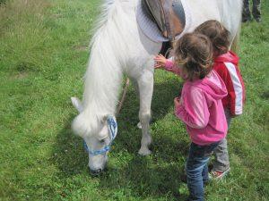 Unser Tipp! Landpartie für Pferdefreunde