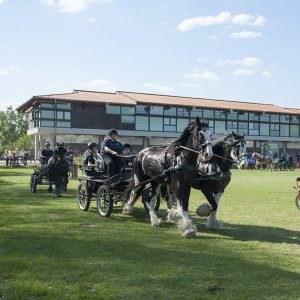 Brandenburger Pferdesommer
