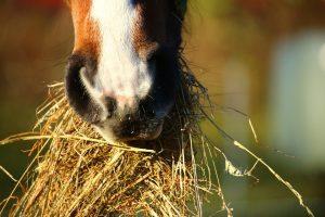 Erste Hilfe für in Not geratene Pferdebetriebe