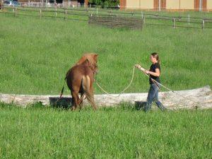 Parelli Horsemanship Kurse auf dem Ponyhof Neuholland